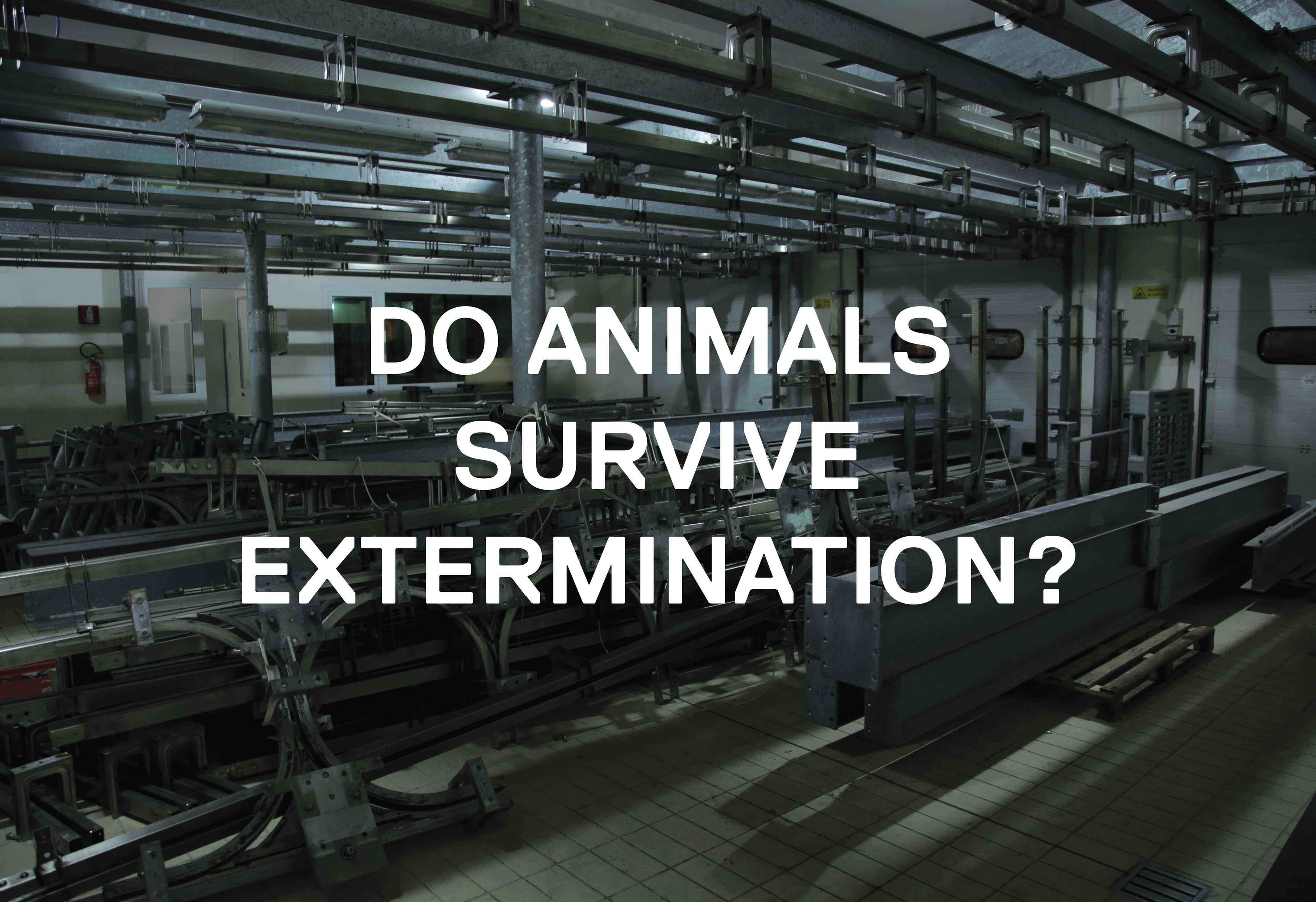 Do Animals...?
